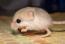 avatar_Катерина